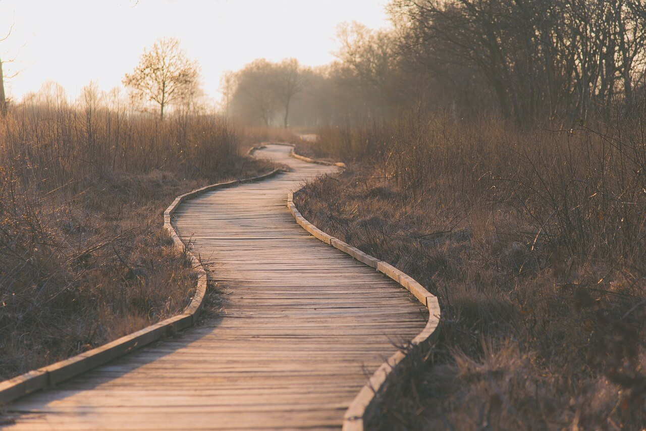 path, wetlands, outdoors